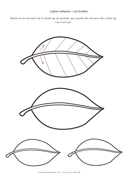 Traits obliques Maternelle Grande section - les nervures des feuilles